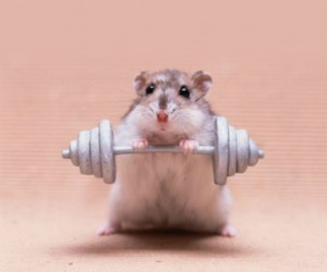 mouse_fb